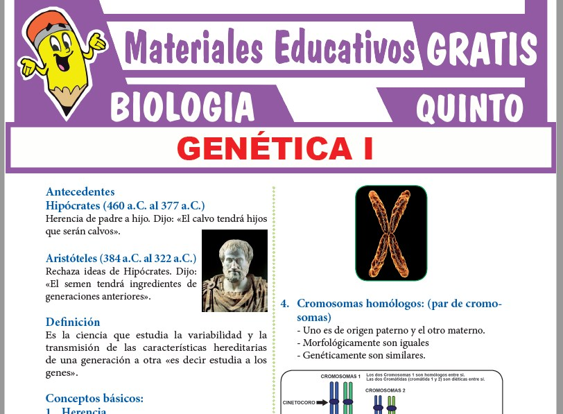 Ficha de La Genética para Quinto Grado de Secundaria